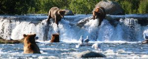 Brooks falls bears by Kara Stenberg