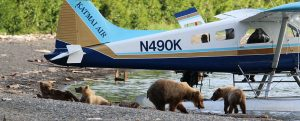 Katmai Air Bears and Float Plane by Kara Stenberg